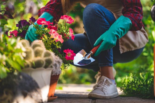 Destaque - Hortas comunitárias ganham espaço em condomínios